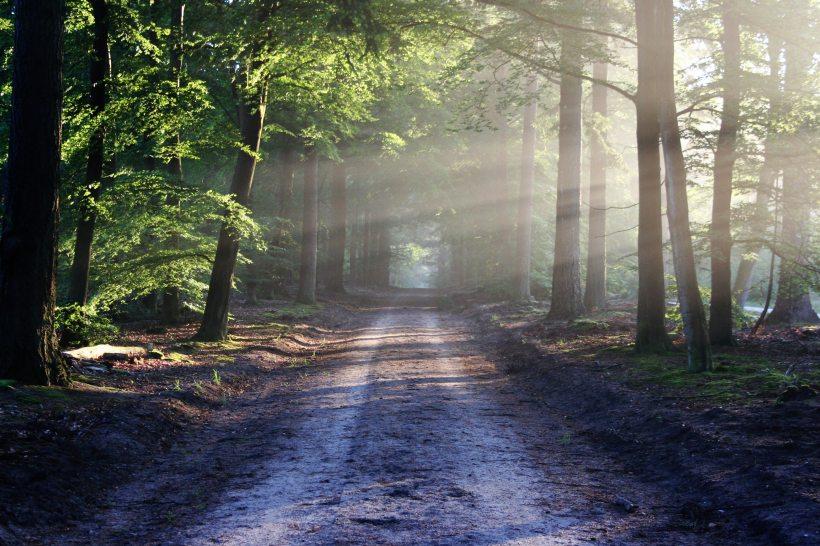 forest-landscape-light-35600